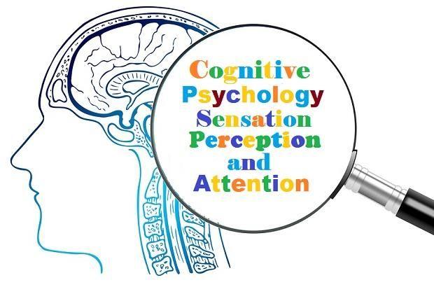 Cognitive Psychology Sensation Perception And Attention The