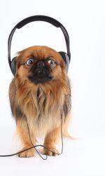 432 Hz - Una rivoluzione musicale! Scopri come puoi entrare più in sintonia con la natura, le tue orecchie ti ringrazieranno...