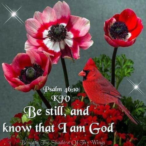 11babec45e1019297603efef19f34e18  pretty birds psalm