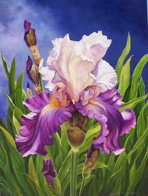 iris watercolor                                                       …