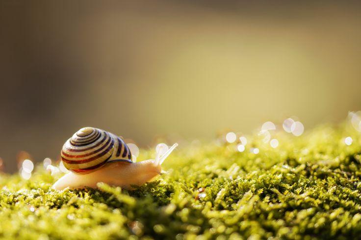 Snail - null