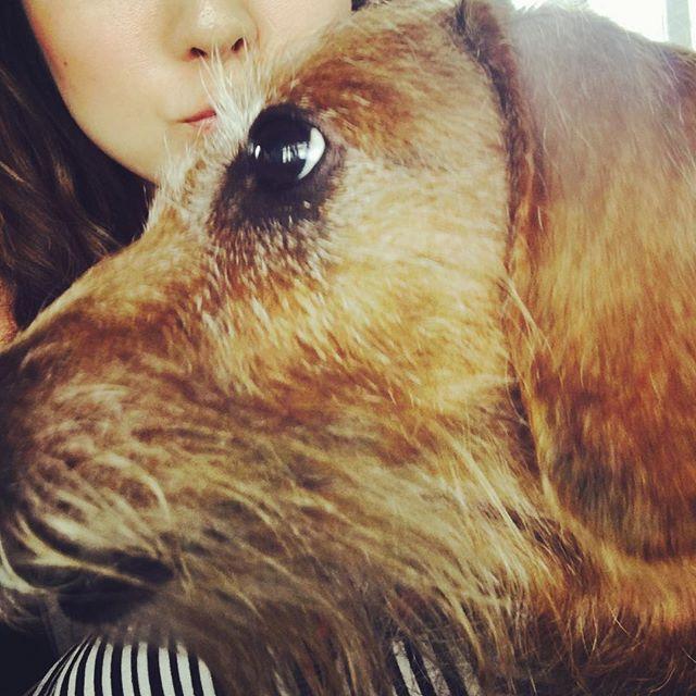 うめです どアップ あたし、でたがりだから #ダックスフント #ミニチュアダックスフント #ダックス #ロングヘアー #ワイヤーヘアー #イヌスタグラム #短足部 #犬 #愛犬 #犬バカ #シニア犬 #Dachshund #dog #japan #dogstagram_japan