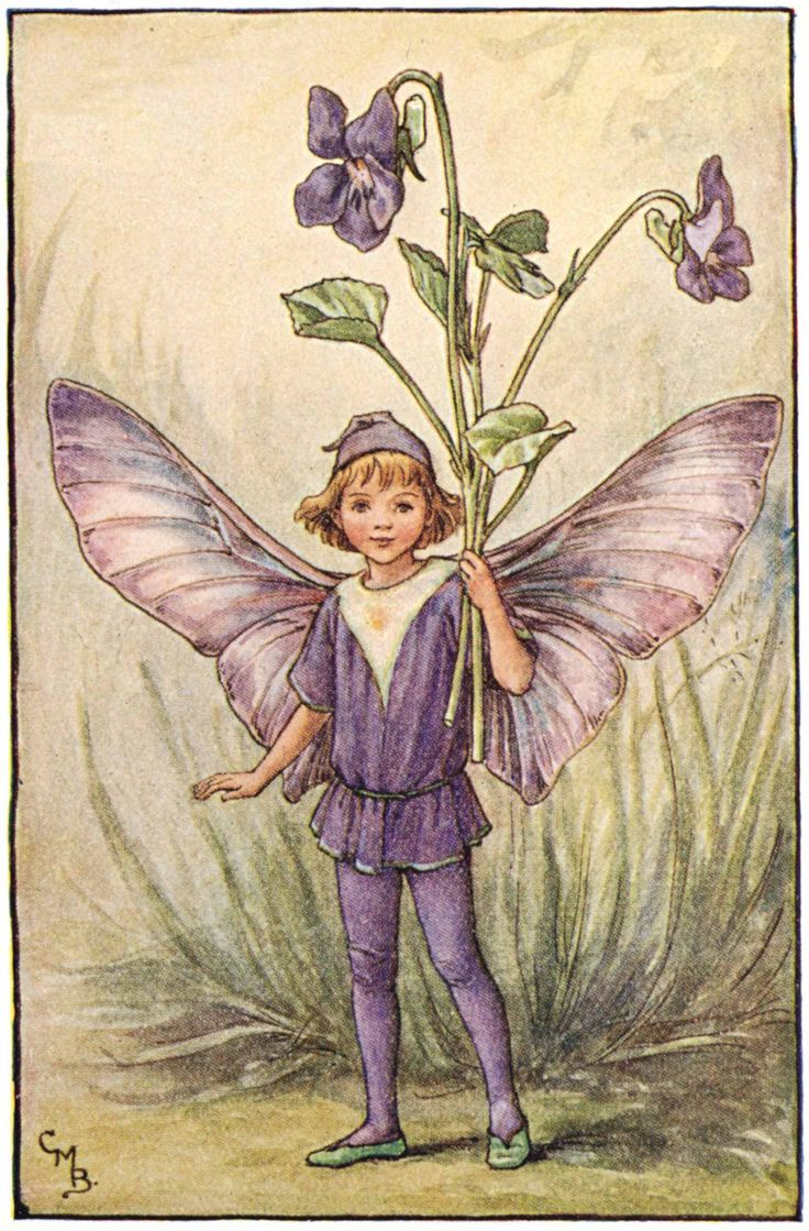 Illustration for the Dog-Violet Fairy from Flower Fairies of the Spring. A boy fairy with outspread wings, stands facing front holding a bunch of violets in his left hand.- Cicely Mary Barker  300.1.9   FF Spring 9 1923