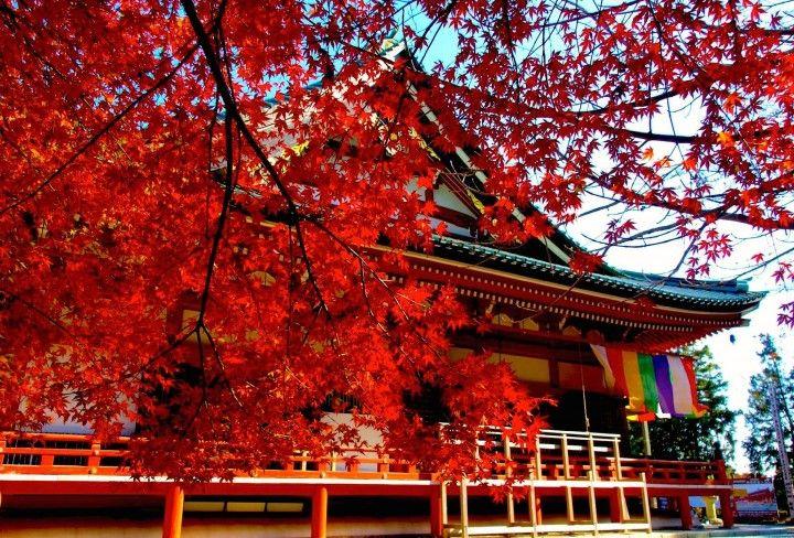 旅行者が選んだ!関西の人気紅葉名所ランキング Top20