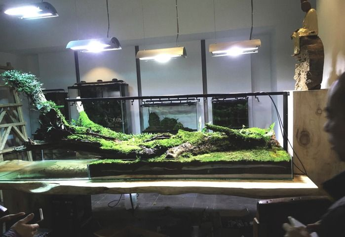 in this free Step by Step guide I will show all the steps in creating the layout of this giant paludarium.the size of the glass aquarium is (LWH) : 3.3mX1.4mX25cm