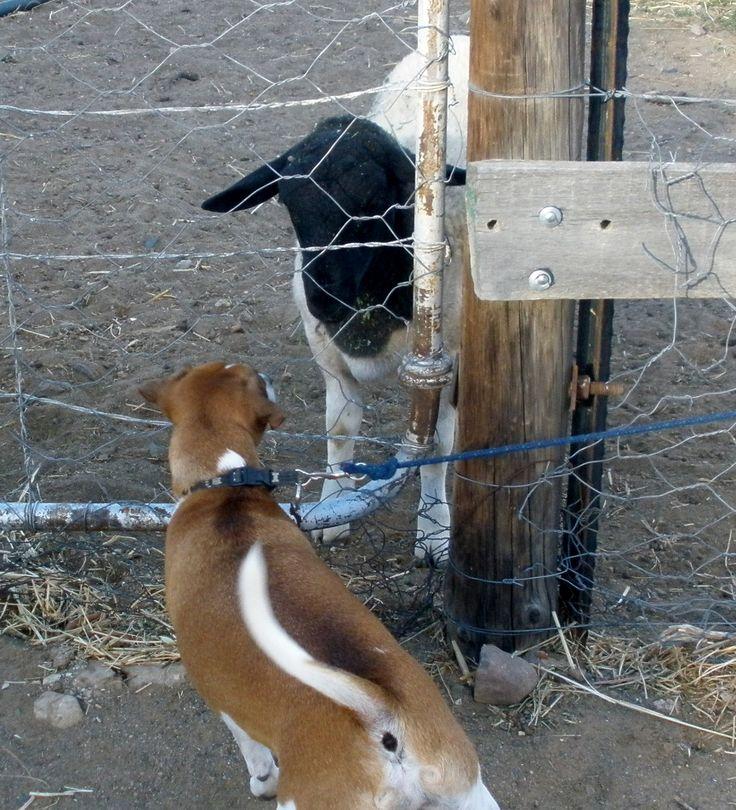 Jocks daily visit to Gayes dairy