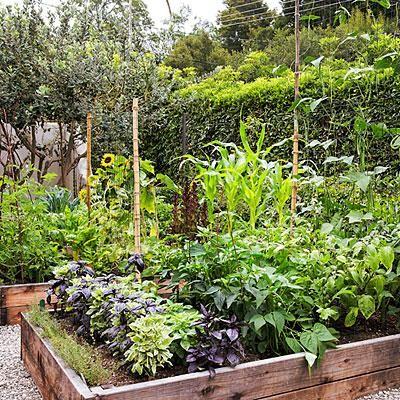 7 Secrets to a Great Edible Garden | Sunset Magazine | jardin potager | bauerngarten | köksträdgård