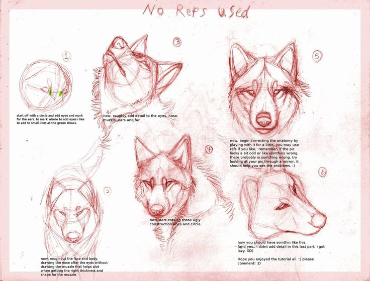 Scribble Drawing Tutorial : Wolf drawing tutorialby b theawsomegeek how to draw