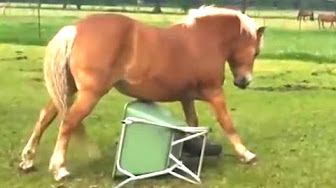 Funny Horses - A Funny Horse Videos Compilation 2015 - YouTube