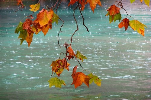 .: Fall Beautiful, Colors Combos, Fall Leaves, Autumn Leaves, Autumn Rain, Fall Rain, Raindrop, Art Projects, Rain Drop