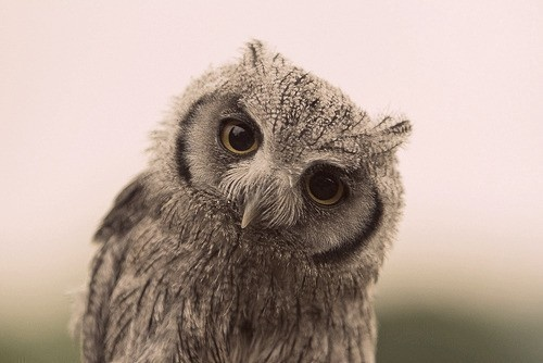 wise animal | Owls | Pinterest
