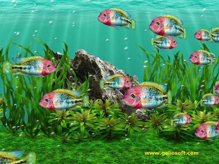 Aquarium Animated Wallpaper - Download