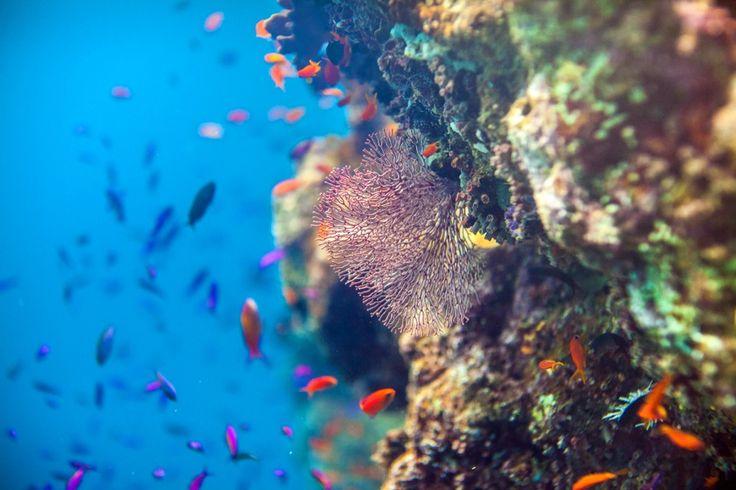Grande barrière de corail, Queensland, Australie La Grande barrière de corail est classée au patrimoine mondial de l'Unesco depuis 1981 et est le plus grand récif corallien du monde.