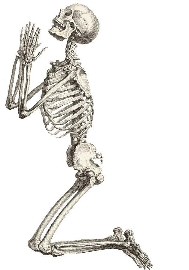 Смешная анатомия в картинках, картинках для женщин