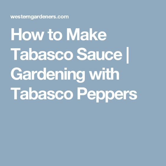 How to Make Tabasco Sauce   Gardening with Tabasco Peppers