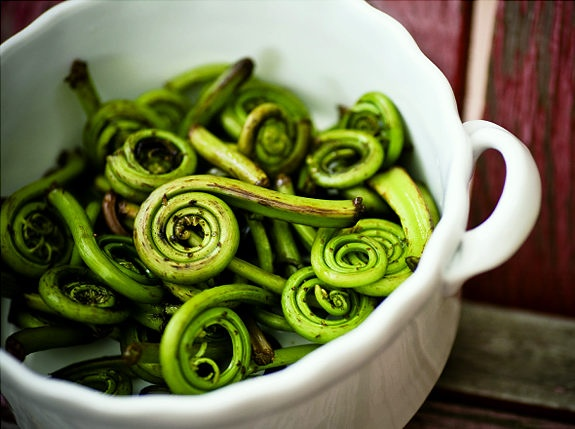 Fiddleheads, native to northern New England and Canada ...