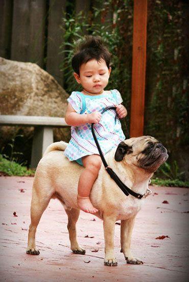 Child riding a Pug | kids with pets | | pets | | kids | #pets https://biopop.com/