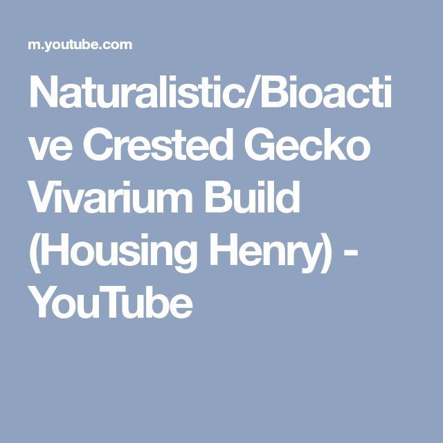 Naturalistic/Bioactive Crested Gecko Vivarium Build (Housing Henry) - YouTube