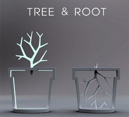 Exceptional Tree And Root Great Pictures