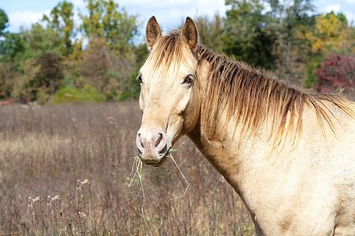 Thanksgiving may mean that you have to leave your horse's care in someone else's hands. Learn how to select the best care for your #horse while you're away. #HorseCare #ThanksgivingPlanning #VacationPlanning http://www.buckleyfence.com/newsMessage.php?id=130