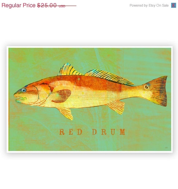 New size available on sale 20 off red drum print for Saltwater drum fish