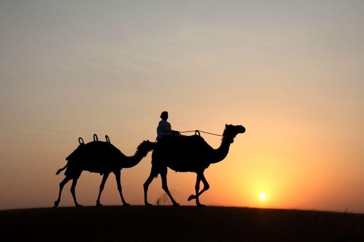 Desert Life Tourism  provide best Desert safari Dubai deals and packages in evening desert safari, overnight desert safari Dubai.