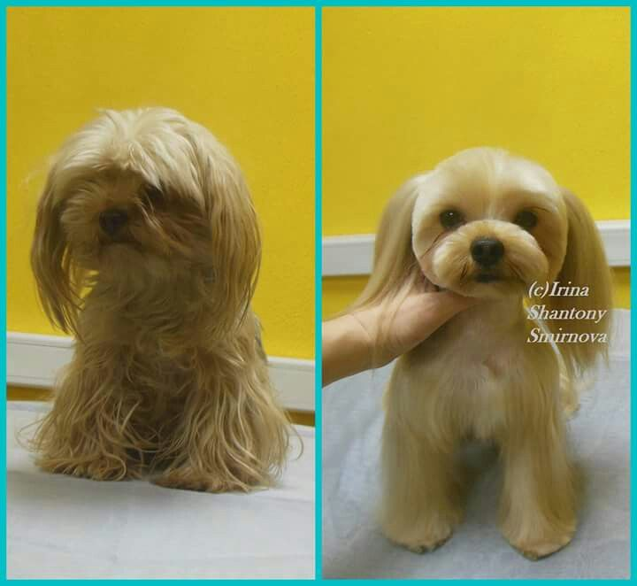 207 best pet grooming images on pinterest dog grooming salons dog repinned before after grooming solutioingenieria Gallery