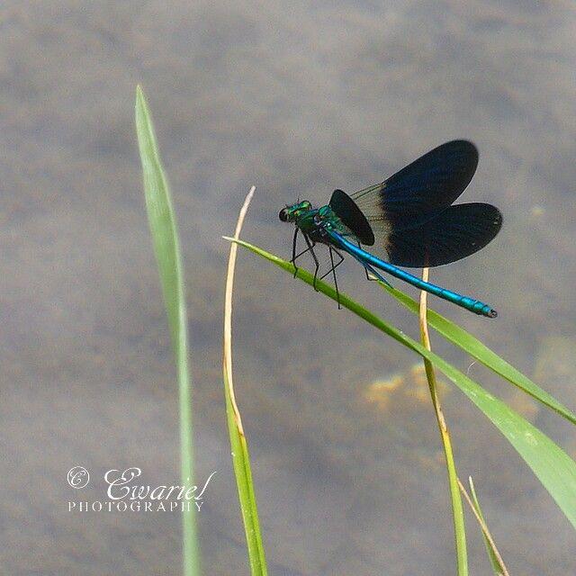 🌱 🌿#EwarielPhotography #nature #forest #leaf #plant #plants #green #leaf #leafs #nature #natural #sauterelle #beautiful #pretty #beauty #planta #plantas #green  #elvish #fae #faerie #fairy #woodland #forest #dragonfly