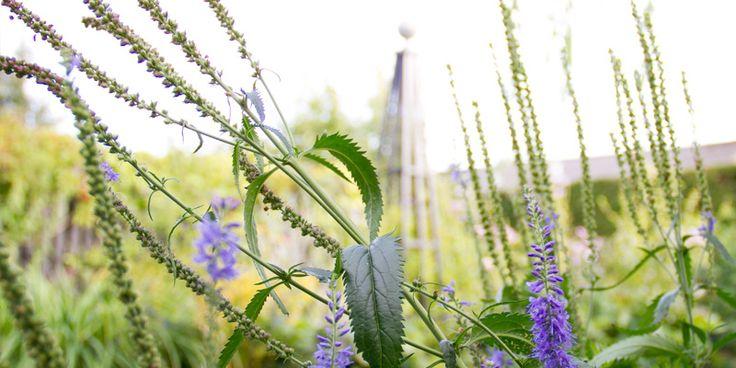 En haveblog om min have og andres jeg har besøgt, flotte steder, picnicspots, køreture og alt hvad jeg finder smukt til haven og boligen.
