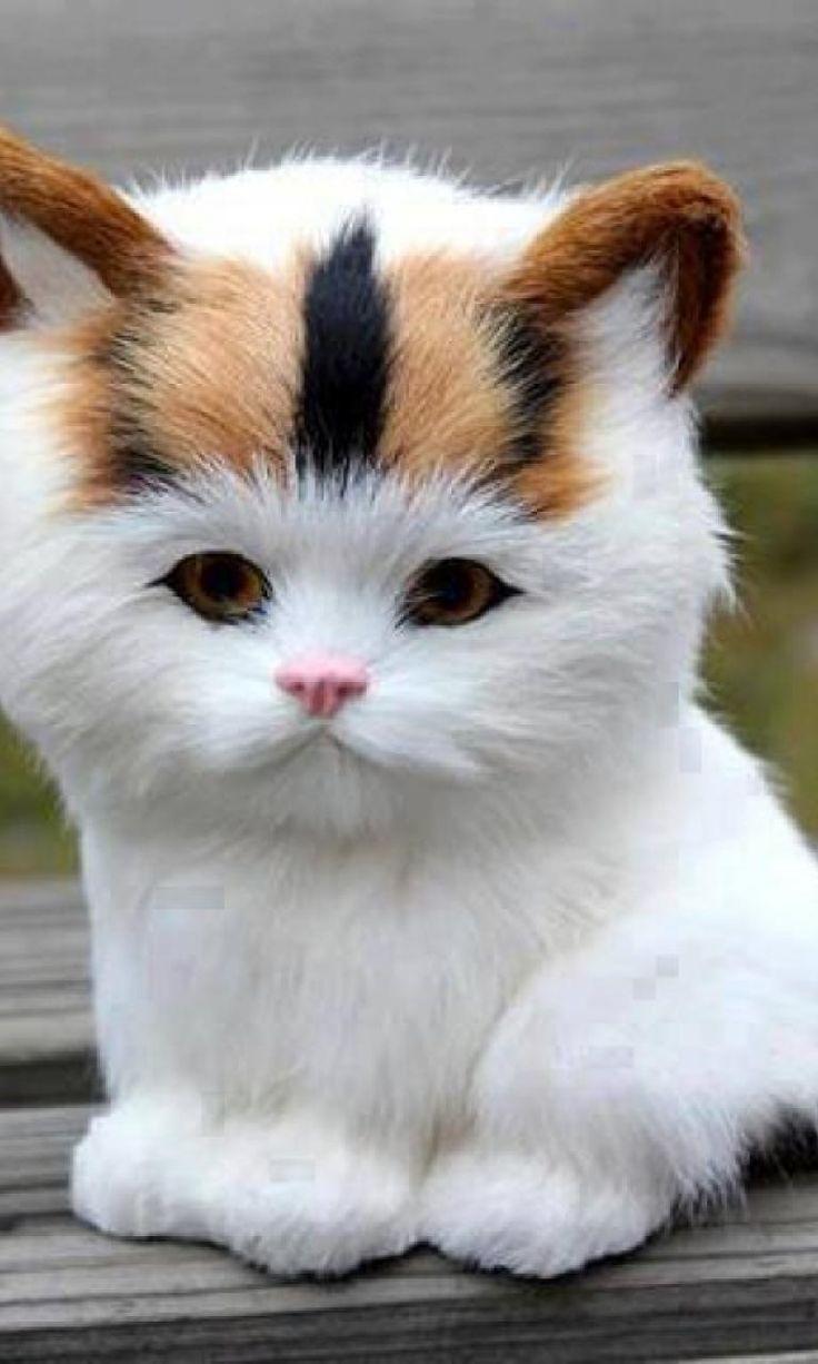 Cute kitten bench white brown 1024x768  - Catsincare.com