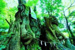 静岡県熱海市にある来宮神社にある樹齢2000年の大楠の木がまるでジブリの世界みたいで素敵 天然記念物にも指定されているんですよ 夕暮れになると草や木々に宿る木霊を表現した明かりが大楠を照らして幻想的な空間に( ) おすすめなパワースポットです tags[静岡県]