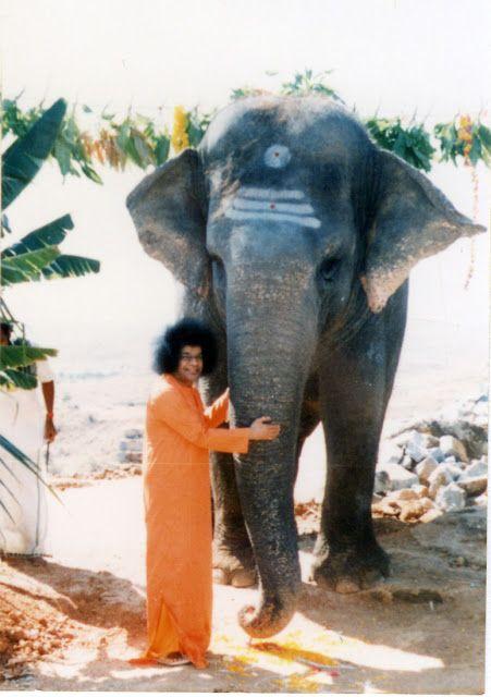 Sai Student: Experiences and Musings: Sai's Geeta - the extraordinary tale of an elephan...