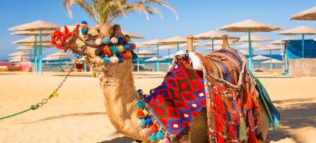 Last Minute Ägypten - 7 Tage im sehr guten 4* Hotel mit All Inclusive bereits für 279€ inkl. Flügen und Transfer
