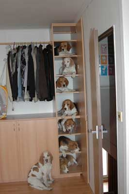 a closet full of beagles... I want!!