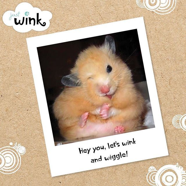 Wink & wiggle! #wink #justwink #wiggle #makesomeonesday