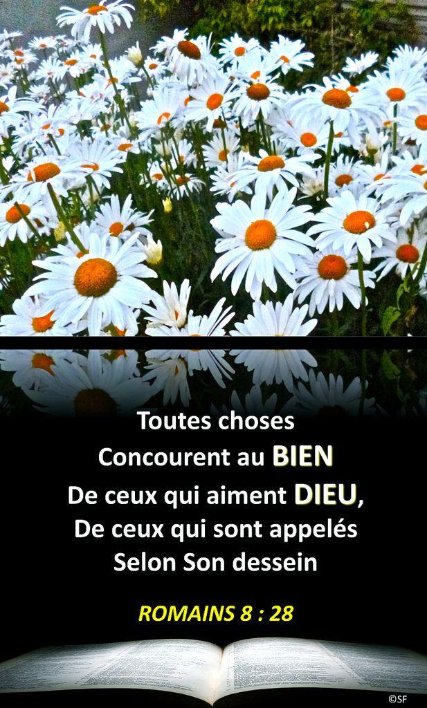 https://flic.kr/p/TyC7Hi | Romains 8, 28 | Ebenezer Halleluiah Creation Marguerites de Picardie Juillet 2014