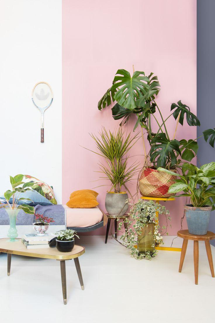 Kamerplanten hebben licht nodig om te groeien. Toch zijn er een aantal soorten die perfect gedijen met wat minder licht. Hoog tijd om dat donkere hoekje in je interieur te transformeren tot een echte blikvanger. Met de exotische en eclectische stijl haal je niet alleen planten, maar ook meteen de zon eén kleur in huis.…