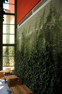 Green Screen.  Make use of vertical elements with this product.  Also a more cost effective alternative to true vegetative wall systems.