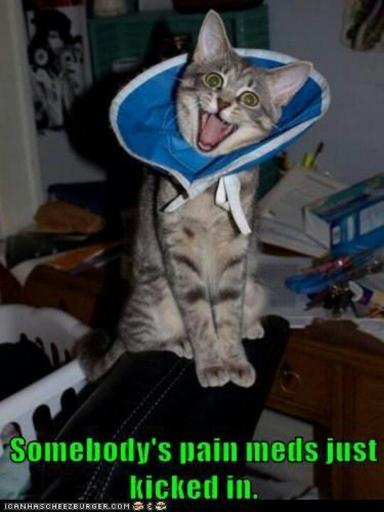 =^..^=ᖴᘢᘗᘗᖻ ᗗᘙᓿᙢᗋᒸ ᙜᕦᙏᕩᔙ ʕ•ᴥ•ʔ ~ That's really funny! :)