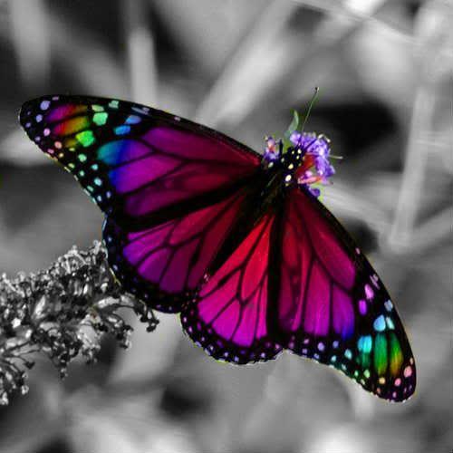 color splash: Purple Butterflies, Inspiration, Nature, Rainbows Color, Beauty Butterflies, Tattoo'S, Rainbows Butterflies, Photo, Stains Glasses