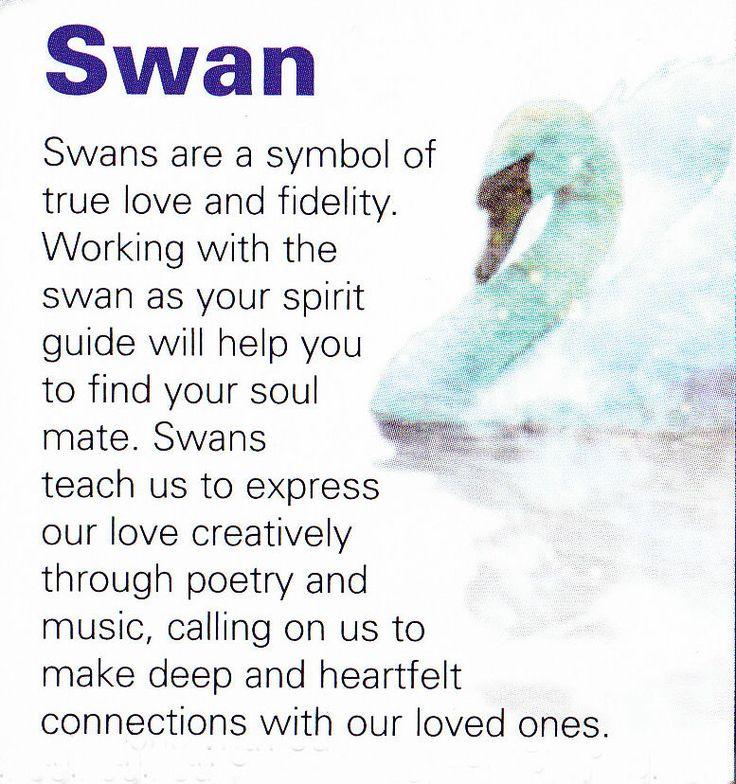 Swan spirit guide                                                                                                                                                                                 More