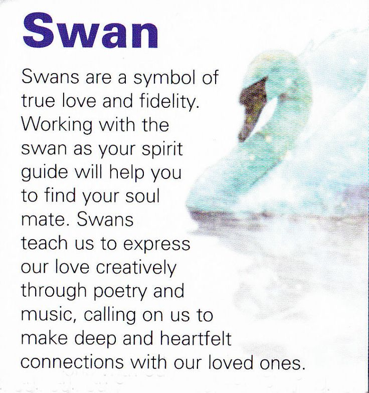Swan spirit guide....found the one my soul and heart loves xxx