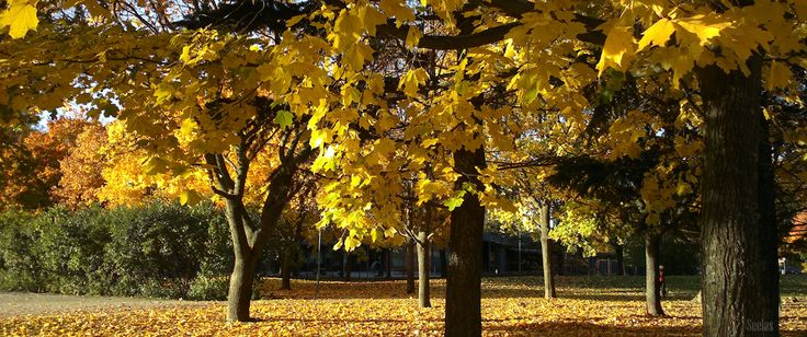 The Colour of Autumn is Yellow