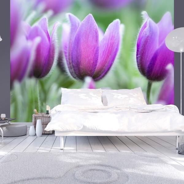 Carta da parati - Primaverili tulipani viola