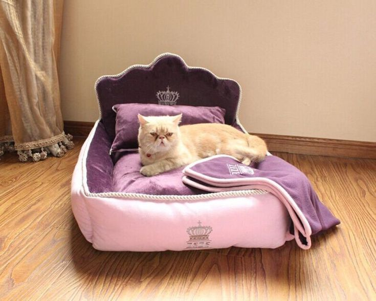 Sleeping Purrty: Best Cat Beds You Can Buy Online http://www.wideopenpets.com/simply-purrfect-the-best-cat-beds-on-amazon/