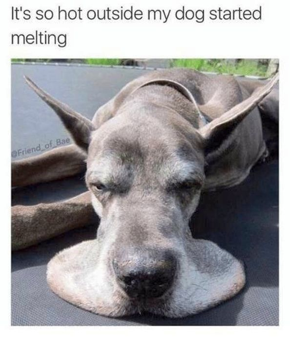 These Memes Perfectly Describe How We All Feel During This Heat Wave Funny Dogs Funny Animals Animals