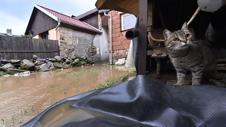 Českem se proháněly bouřky, Nový Rychnov na Pelhřimovsku zasáhla lokální povodeň– Novinky.cz