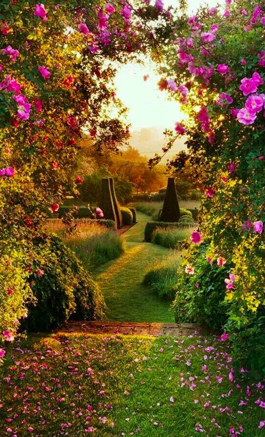 Dawn light on the parterre at Pettifers Garden in North Oxfordshire, England .
