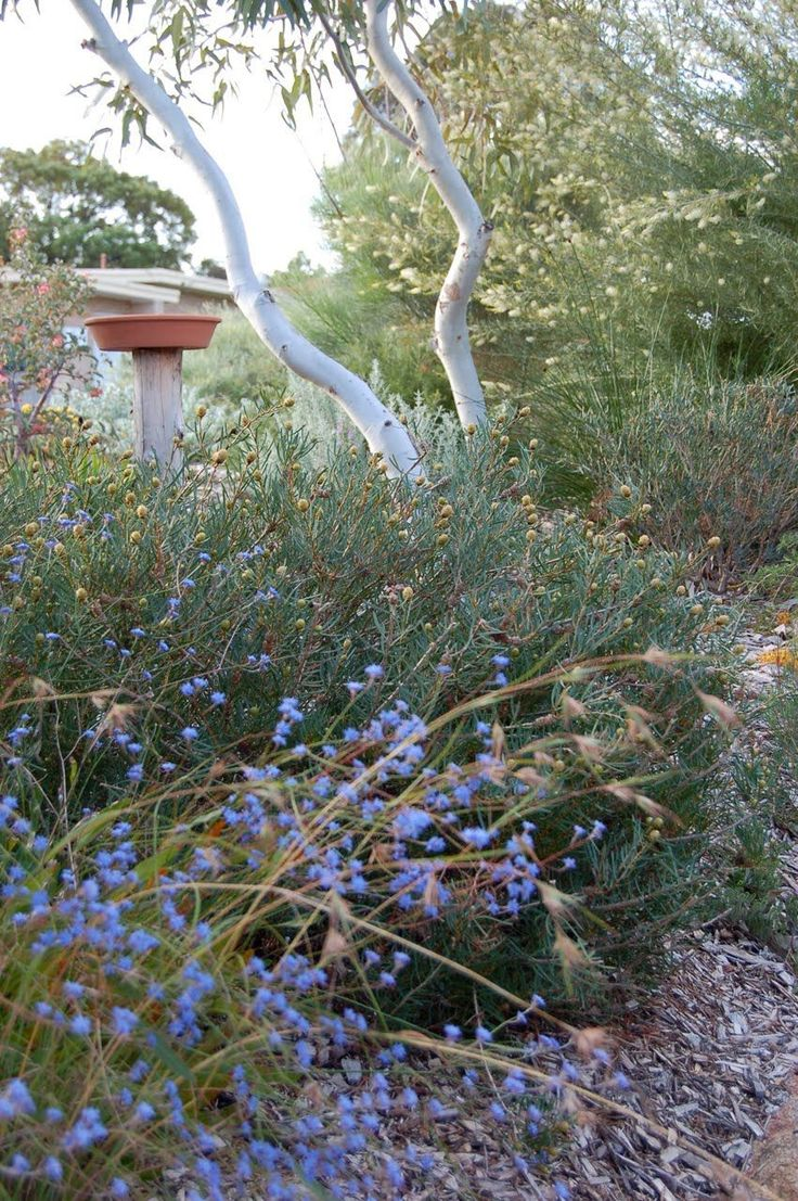 Bird bath Australian native bush garden >>> Good idea for the house up the Coast, at least in the areas of yard not being shaded out by trees or used for herbs and veges.