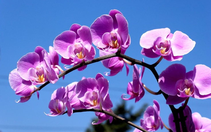 soooo pretty !Colors Purple, Pink Flower, Purple Orchids, Spring Flower, Lights Purple, Google Search, Orchids Flower, Hair Sliding, Sea Blue